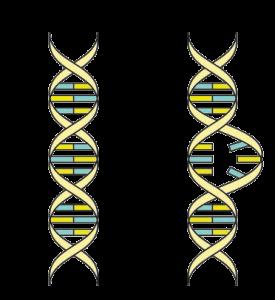 uv light sterilization destroys DNA